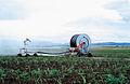 CSIRO ScienceImage 4536 Spray irrigation of new sugarcane crop Atherton QLD.jpg