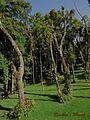 CURITIBA - BRASIL BY AUGUSTO JANISCKI JUNIOR - Flickr - AUGUSTO JANISKI JUNIOR (22).jpg