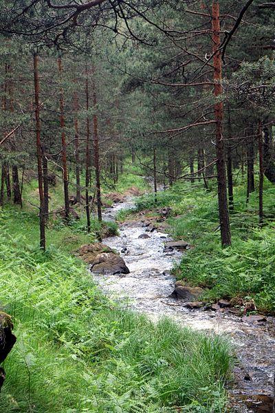 Природний заповідник «Чалачки поток», Сербія. Автор фото — Veljko Pejovic (CC-BY-SA-3.0)