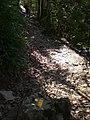 Camí entre Santa Magdalena del Mont i les Olletes (març 2011) - panoramio.jpg