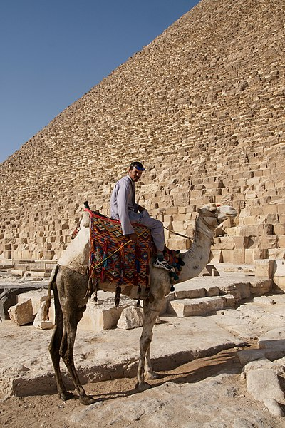 File:Camel and it's rider in Giza.jpg