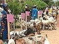 Cameroon Goats1.JPG
