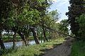 Canal du Midi, Vias, Hérault (04).jpg