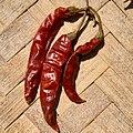 Capsicum annuum-Red Chilli Pepper 02.jpg