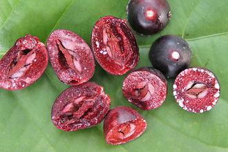 Carissa carandas - Fruits ready for consumption