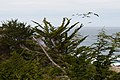 Carmel Highlands May 2011 002.jpg