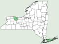 Carpinus betulus NY-dist-map.png