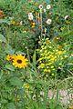 Casa y jardín de Monet. 46.JPG