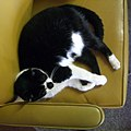 Cat, Booked-Up 2008.jpg