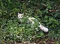 Cat near Lower Gabwell - geograph.org.uk - 787683.jpg