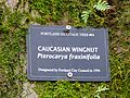 Caucasian Wingnut sign - Portland Oregon.jpg