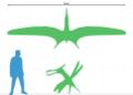 Caulkicephalus size chart.png