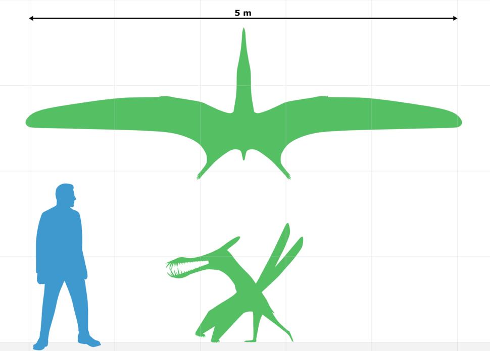 Caulkicephalus size chart
