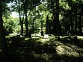 Cemetery in Brętowo - panoramio - Sławek Zawadzki (4).jpg