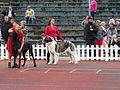 Central Asia Shepherd (full).JPG