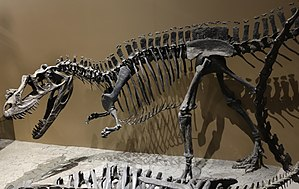 Ceratosaurus - Cast of Ceratosaurus from the Cleveland Lloyd Quarry, on display at the Natural History Museum of Utah