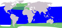 Green: Long-finned range; Blue: Short-finned.