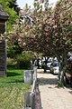Cherry Blossoms - Adams National Historic Site.jpg