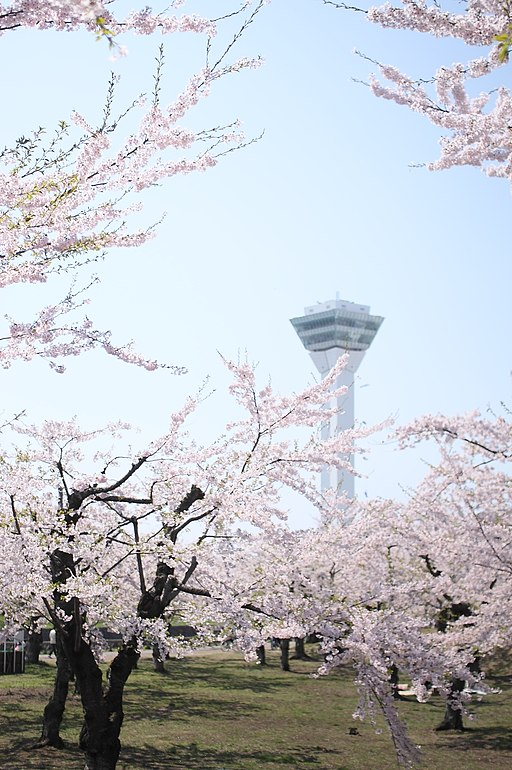 Cherry blossom at Goryoukaku - 五稜郭公園の桜 - panoramio