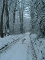 Chilly in the woods - geograph.org.uk - 1707875.jpg