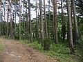 Chojnice, Poland - panoramio (41).jpg