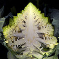 Chou Romanesco-coupe longitudinale.jpg