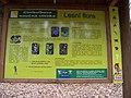 Cinibulkova stezka, Lesní flora.jpg