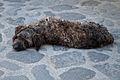 Civita di Bagnoregio - Dog (5783615740).jpg