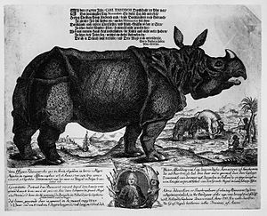 "Clara (rhinoceros) - Example of the mass-produced souvenir pictures of Clara sold by Douwe Mout van der Meer; this example from her stay at the Gasthof ""Zum Pfau"" in Mannheim in November 1747."