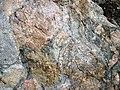 Clast-rich mixtite (Coleman Member, Gowganda Formation, Paleoproterozoic, ~2.3 Ga; Percival Lake roadcut, Ontario, Canada) 12 (47673987242).jpg