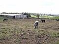 Clay Walls Farm - geograph.org.uk - 1274112.jpg