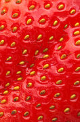Closeup of a strawberry.jpg