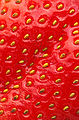 Closeup of a strawberry.jpg