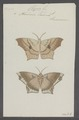 Clysia - Print - Iconographia Zoologica - Special Collections University of Amsterdam - UBAINV0274 059 02 0007.tif