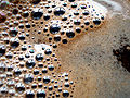 Coffee bubbles.jpg