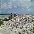 Collectie Nationaal Museum van Wereldculturen TM-20029675 Lege kark¾schelpen, vermoedelijk bij de lagune Lac Bonaire Boy Lawson (Fotograaf).jpg