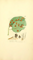 Coloured Figures of English Fungi or Mushrooms - t. 410.png