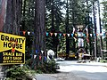 Confusion Hill in Redwoods 324.jpg