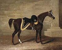 Copenhagen (Wellington's horse).jpg