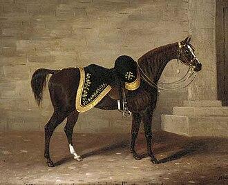 Copenhagen (horse) - Copenhagen as painted in his retirement by Samuel Spode.