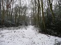 Coppice Woods - geograph.org.uk - 1724130.jpg