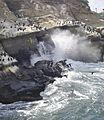 Cormorants at La Jolla Cave - 12.jpg