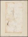 Corvina cuja - 1700-1880 - Print - Iconographia Zoologica - Special Collections University of Amsterdam - UBA01 IZ13400065.tif