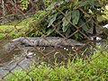 Costa Rica (6109762497).jpg
