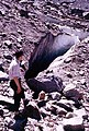 Crevasse.arp.500pix.jpg