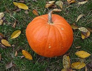 Pumpkin Español: Calabaza Français : Citrouill...