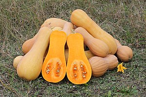 Three Sisters (agriculture) - Image: Cucurbita moschata Butternut 2012 G2