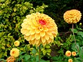 Dahlia Display - geograph.org.uk - 1531379.jpg