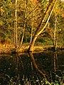 Dark Reflection - panoramio.jpg