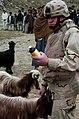 Defense.gov photo essay 070205-A-7953G-010.jpg